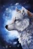 solodance - éleveur canin Dogzer