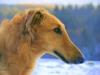 bessie32 - éleveur canin Dogzer
