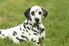 chevalcannelle1 - éleveur canin Dogzer