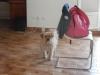 ouafouag34agathe - éleveur canin Dogzer