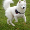 celia450 - éleveur canin Dogzer