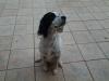 2002ocece - éleveur canin Dogzer