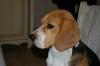 Heros-julie - éleveur canin Dogzer