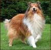 fany35420 - éleveur canin Dogzer