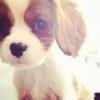 MamzelleAnayis - éleveur canin Dogzer
