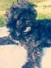 noe1112 - éleveur canin Dogzer