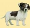 leeaguilhem - éleveur canin Dogzer