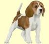 gabi2007 - éleveur canin Dogzer