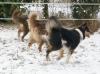 alice1003 - éleveur canin Dogzer