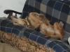 auriben - éleveur canin Dogzer