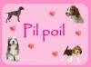 pil poil - éleveur canin Dogzer