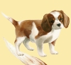 jenifer0000 - éleveur canin Dogzer