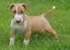 FabinoucheLoVe - éleveur canin Dogzer