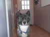 Libou1554 - éleveur canin Dogzer
