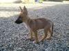 66charlotte - éleveur canin Dogzer