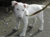 lounae_chiens_love - éleveur canin Dogzer