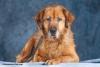 chouchoufd - éleveur canin Dogzer