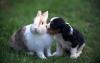 lolou233 - éleveur canin Dogzer