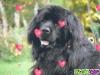 laula39 - éleveur canin Dogzer