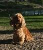 dismada - éleveur canin Dogzer