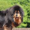 jewel14 - éleveur canin Dogzer