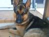 morgane81570 - éleveur canin Dogzer