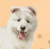 motus66 - éleveur canin Dogzer