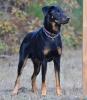 Hatchi17 - éleveur canin Dogzer