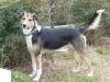 MMLA - éleveur canin Dogzer