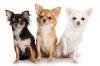 audesmile - éleveur canin Dogzer