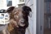 taissa - éleveur canin Dogzer