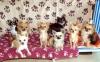 Lustucru2 - éleveur canin Dogzer