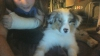 opaline31 - éleveur canin Dogzer