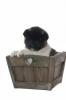 Kaelice - éleveur canin Dogzer