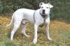 Laloveuse9 - éleveur canin Dogzer