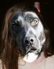 chague - éleveur canin Dogzer