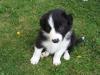 camomille07 - éleveur canin Dogzer