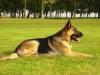 Guigui2507 - éleveur canin Dogzer