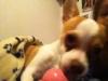 khloe2013 - éleveur canin Dogzer