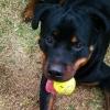 Cynthia Sirois - éleveur canin Dogzer