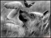 camely - éleveur canin Dogzer