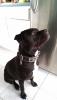 sophie313 - éleveur canin Dogzer