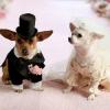 laura_5 - éleveur canin Dogzer