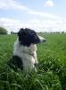 Around - éleveur canin Dogzer