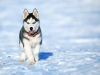 INESCALVET - éleveur canin Dogzer