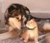 callamaria - éleveur canin Dogzer
