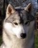 isa44 - éleveur canin Dogzer