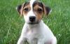 CrevetteRose - éleveur canin Dogzer