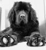 mathiilde76 - éleveur canin Dogzer