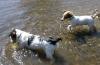 era30 - éleveur canin Dogzer